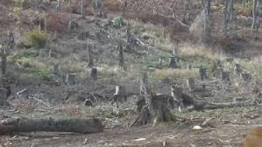 Шумската полиција фати дрвокрадци кои со пет шпедитери превезуваа огревно дрво